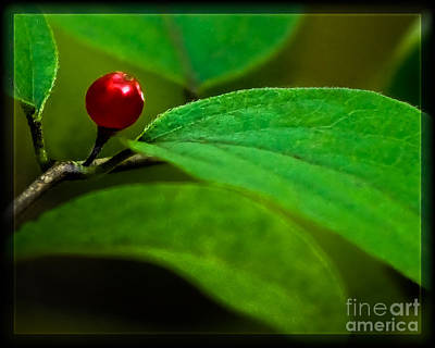 Photograph - Red Berry by Michael Arend