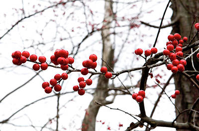 Photograph - Red Berry Sprig by Lorraine Devon Wilke