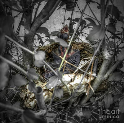 Photograph - Red Bird Nest by D Wallace