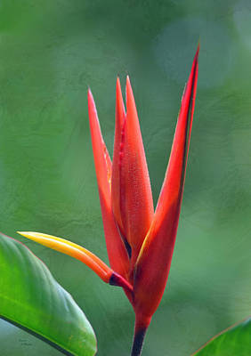 Photograph - Red Bird Of Paradise by Sandi OReilly