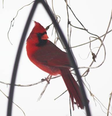 Red Bird On A Vine Original Art Print