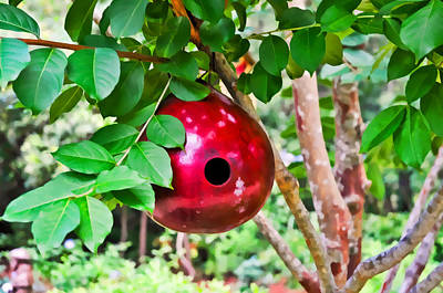 Photograph - Red Birdhouse In Garden by Ginger Wakem