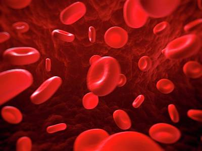 Red Blood Cells Art Print by Sebastian Kaulitzki