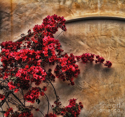 Red Bougainvilla Vine On Stucco Wall Art Print by Clare VanderVeen