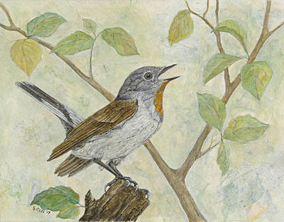 Painting - Red Breasted Flycatcher by Sandy Clift