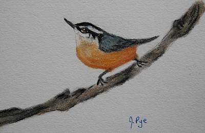 Pastel - Red Breasted Nuthatch by Joan Pye