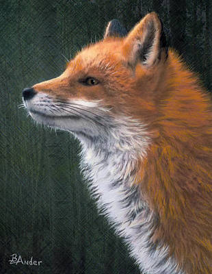 Fox Drawing - Red by Brent Ander