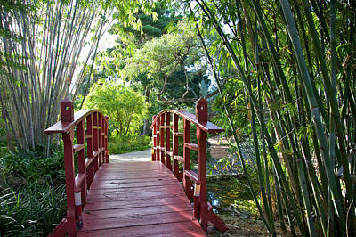 Photograph - Red Bridge Over Pond Near Bamboo In by Barry Winiker