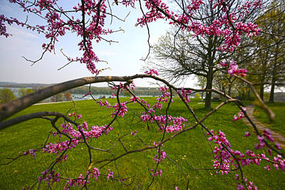 Photograph - Red Bud Bloom by John Holloway