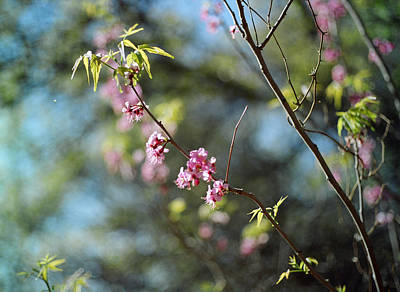 Medium Format Film Digital Art - Red Buds In Bloom by Linda Unger