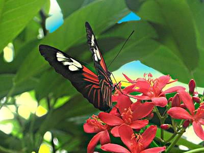 Peace Photograph - Red Butterfly On Red Flowers by Mario Perez