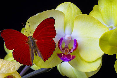 Pretty Orchid Photograph - Red Butterfly On Yellow Orchid by Garry Gay