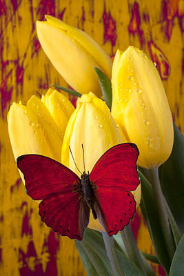 Red Butterfly Resting On Tulips Art Print by Garry Gay