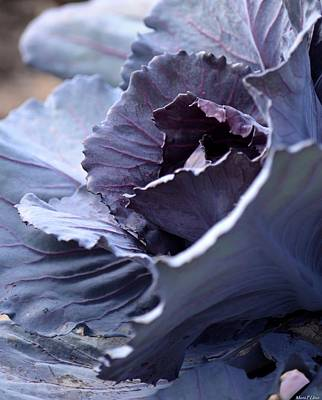 Photograph - Red Cabbage Abstract by Maria Urso