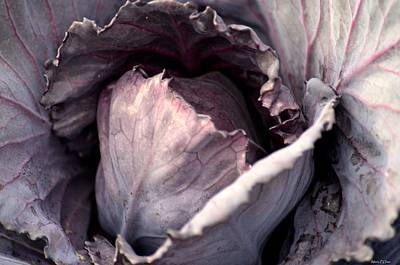 Photograph - Red Cabbage by Maria Urso