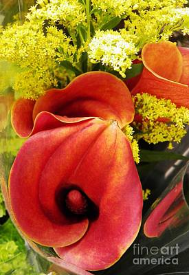Photograph - Red Callas by Sarah Loft