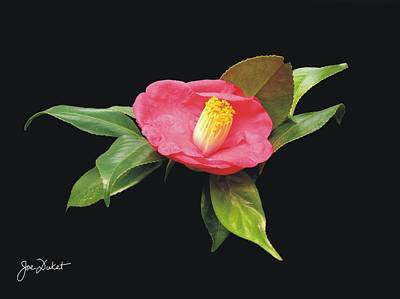 Photograph - Red Camellia Flower by Joe Duket
