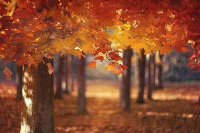 Autumn Photograph - Red Canopy by Magda  Bognar