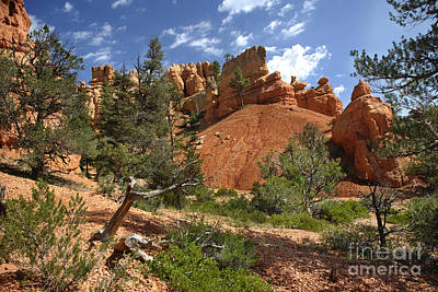 Photograph - Red Canyon by Jason Kolenda