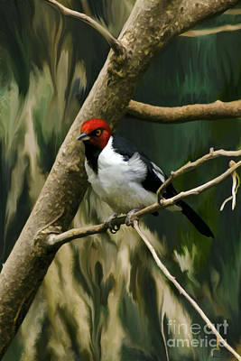 Art Print featuring the photograph Red-capped Cardinal by Adam Olsen