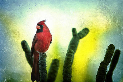 Photograph - Red Cardinal No. 1 - Kauai - Hawaii by Belinda Greb