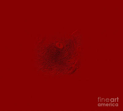 Digital Art - Red Cat Face. by Oksana Semenchenko