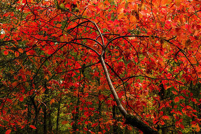 Great Smoky Mountains Photograph - Red by Chad Dutson
