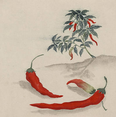 Pepper Digital Art - Red Chilli by Aged Pixel