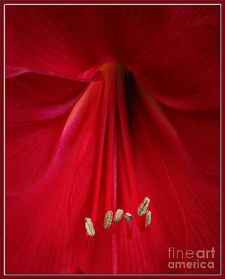 Photograph - Red by Chris Anderson