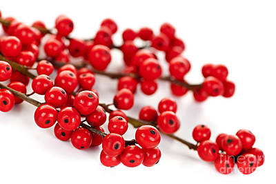Holly Photograph - Red Christmas Berries by Elena Elisseeva