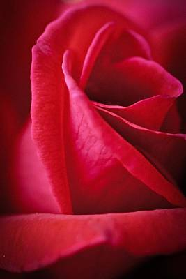 Photograph - Red by Christopher Meade
