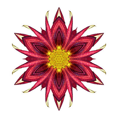 Photograph - Red Chrysanthemum IIi Flower Mandala White by David J Bookbinder