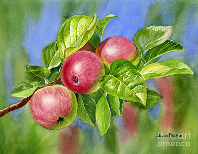 Apple Watercolor Painting - Red Cider Apples With Background by Sharon Freeman