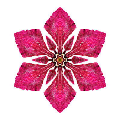 Photograph - Red Clematis I Flower Mandala White by David J Bookbinder