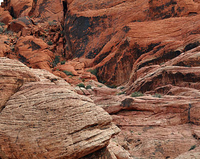 Photograph - Red Climbing by Kirt Tisdale