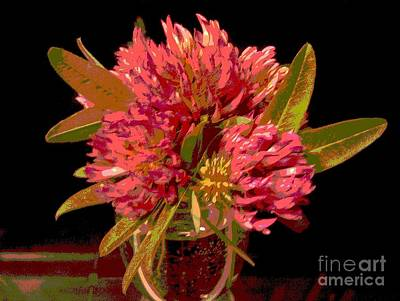 Martin Howard Photograph - Red Clover 1 by Martin Howard