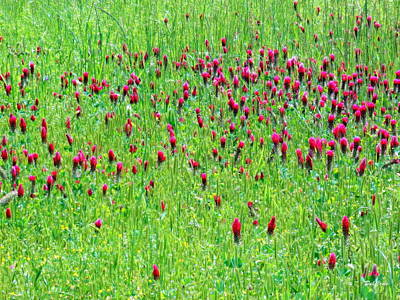 Photograph - Red Clover Field by Deborah  Crew-Johnson