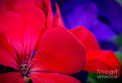 Photograph - Red Comfort by Michael Arend