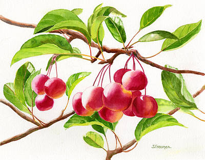 Red Crab Apples Art Print by Sharon Freeman