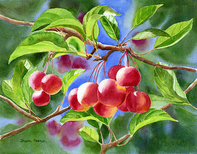 Apple Watercolor Painting - Red Crab Apples With Background by Sharon Freeman