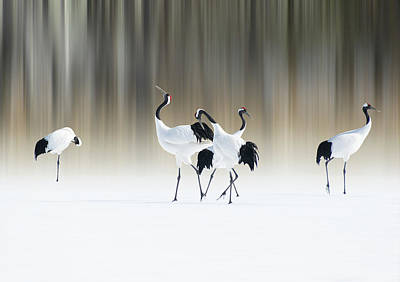 Red-crested White Cranes Art Print