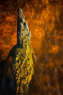 Photograph - Red Croc by Paul Camhi