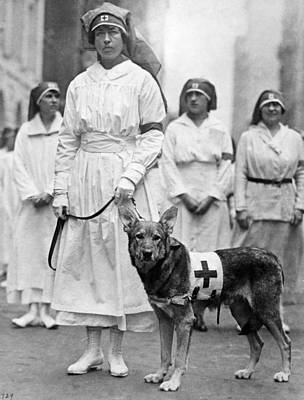 German Shephard Photograph - Red Cross Parade, 1920 by Granger