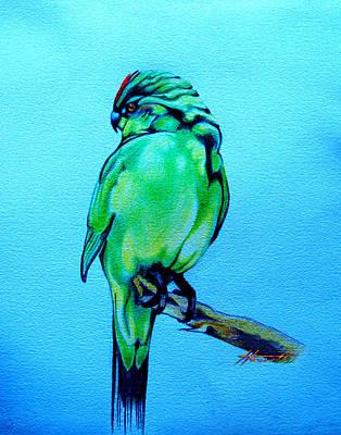 Parakeet Drawing - Red Crowned Parakeet by Patricia Howitt