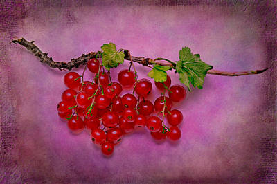 Photograph - Red Currant by Zoran Buletic