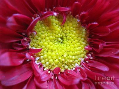 Photograph - Red Dahlia by Tara  Shalton