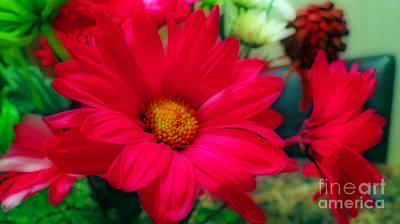 Photograph - Red Daisies by Kay Novy