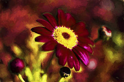 Aromatherapy Oils - Red Daisy by Henry Inhofer