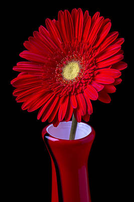 Gerbera Daisy Photograph - Red Daisy In Red Vase by Garry Gay