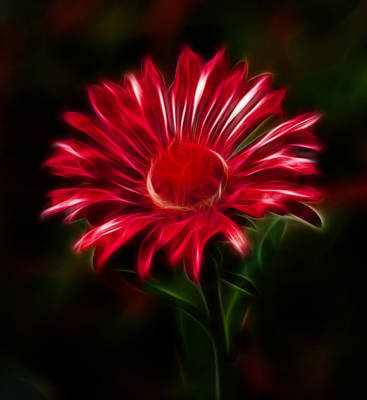 Dark Photograph - Red Daisy by Shane Bechler